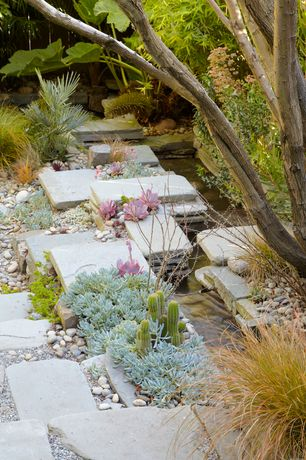 Tropical Landscape/Yard with Natural stone pathway, Pond, Echeveria Plant, Pathway, Succulents, Tumbled Bluestone Pavers