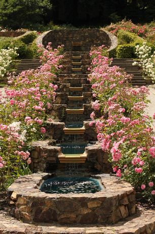 Traditional Landscape/Yard with Fountain, Raised beds, Pathway, Pond, waterfall steps, Pink Double Knock Out Rose