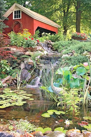 Eclectic Landscape/Yard with Raised beds, Pond, Fire Sense Male Crane Garden Statue, Burgandy Princess Lily Pad