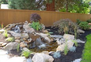 Traditional Landscape/Yard with Elijah Blue Fescue Festuca glauca, Fence, Weeping Japanese Maple, Pond
