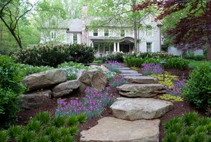 Traditional Landscape/Yard with Outsidepride Poppy Meconopsis Violet - 400 Seeds, Pathway, Arched window, Raised beds