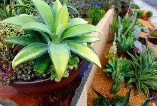 Eclectic Landscape/Yard with Agave Desmettiana Varigata