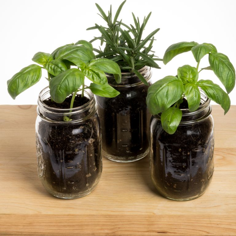 Vertical Gardening - Home Improvement Projects, Tips & Guides - 웹