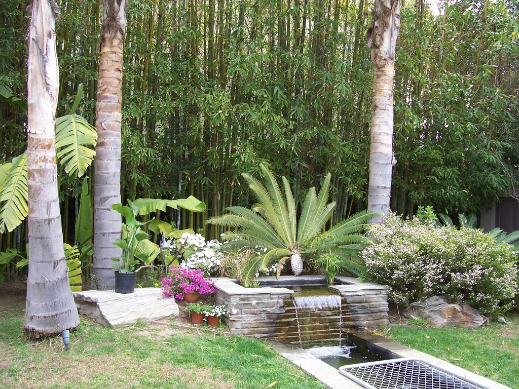 Tropical Landscape/Yard with Pond, Fence