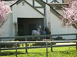 2065 Refugio, Santa Ynez, CA