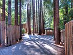 377 Madrone Ave, Larkspur, CA