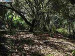0 Hidden Oaks, Hayward, CA