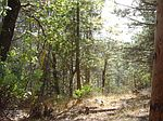 5315 Five Spot Rd, Pollock Pines, CA