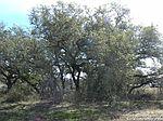 48 Acres Us Hwy # 87, La Vernia, TX