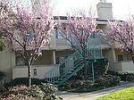 107 Sunnyhills Ct, Milpitas, CA
