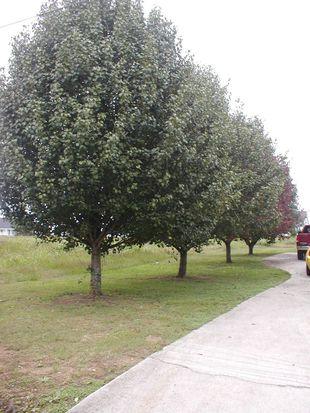 352 County Road 668, Hanceville, AL 35077