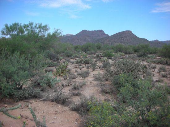 4165 W Butterfly Mountain Dr, Marana, AZ 85658