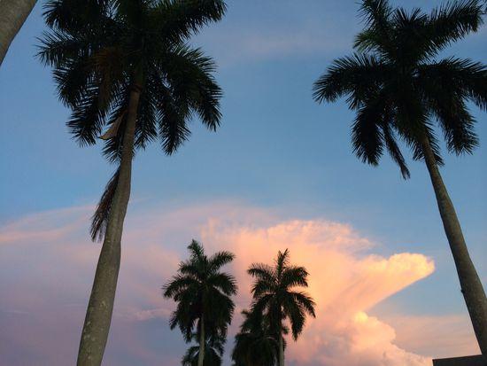 3593 Edgewood Ave, Fort Myers, FL 33916