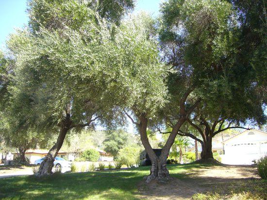 16220 Swartz Canyon Rd, Ramona, CA 92065