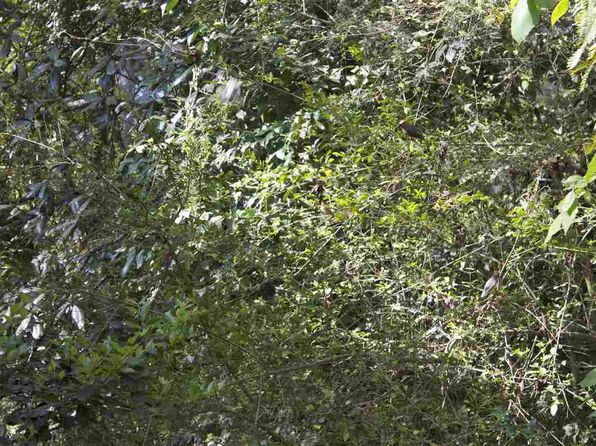 null bed null bath Vacant Land at 300 Tranquility Ln Havana, FL, 32333 is for sale at 15k - google static map